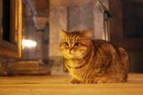 İSTANBUL VALİSİ - İstanbul Valisi Yerlikaya'dan Ayasofya'nın kedisi 'Gli'yle ilgili paylaşım!