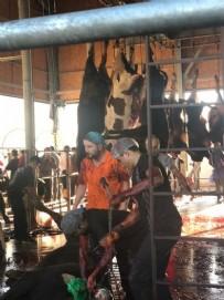 KAYAŞEHİR - İBB'den kurban rezaleti! Vatandaşın hayvanı askıda kaldı, kasaplar kaçtı...
