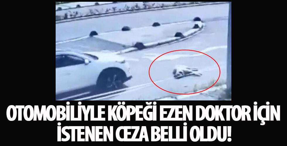 İstanbul'da, aracıyla köpeğin üzerinden geçerek ölümüne neden olan doktora dava