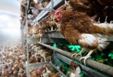 3 Milyon 734 Bin Kanatlı Hayvan Sevki Yapıldı