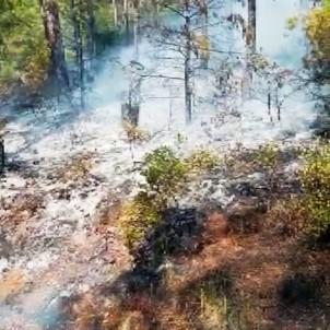 Cumhurbaşkanlığı Konuk Evi Yolu Üzerinde Yangın