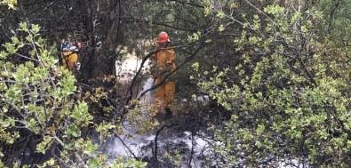 Orman Yangın Büyümeden Söndürüldü