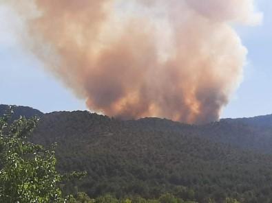 Başkentte Ormanlık Alanda Yangın