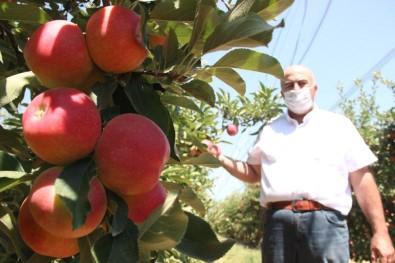 Covid-19'Dan Dolayı Karaman'da Üretilen 400 Bin Ton Elmanın Yüzde 70'İ Dalında Satıldı
