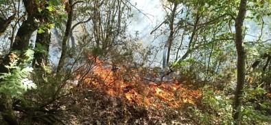 Düzce'de Fındıklıkta Çıkan Yangın Ormana Sıçradı
