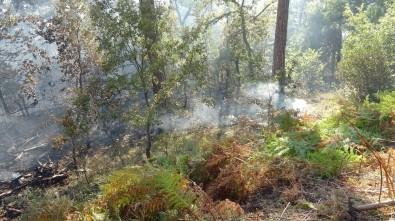 Ormanda Çıkan Yangın Kontrol Altına Alınmaya Çalışılıyor