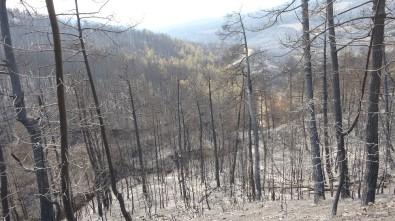 Yeşil Ormandan Geriye Külleri Kaldı