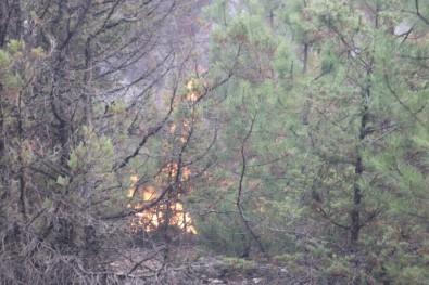 Nallıhan'daki Orman Yangını Kontrol Altına Alındı