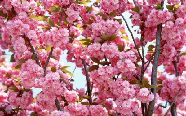 Bahar Alerjisi Boğaz Ağrısı Yapar mı?