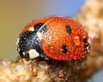 Çiy İle Kaplı Böceklerin Çarpıcı Makro Fotoğrafları