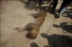 Leoparı Linç Ettiler