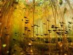 NATIONAL GEOGRAPHIC - National Geographic En İyi Sualtı Fotoğrafları