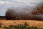 İlham Verici Doğa Fotoğrafları