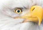 NATIONAL GEOGRAPHIC - National Geographic-En İyi Vahşi Yaşam Fotoğraf