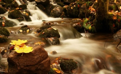 KARADENIZ - Saklı Cennet'te sonbahar renkleri