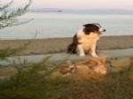 İNCİ TÜRKAY - Akıllı Köpek Max'in Çekimleri Bozcaada'da Yapılıyor