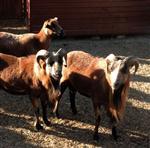 SELAHATTİN KARAAHMETOĞLU - Giresun'da Hayvanat Bahçesi Açıldı