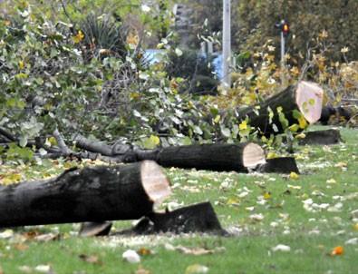 Yalova'da kesilen ağaçlar taşınabilirdi