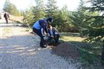 Hamamözü'nde Ağaçlandırma Çalışması