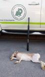 Far Işığıyla Tavşan Avına 2 Bin 900 Lira Ceza