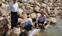Amasya'da 2 Gölete 20 Bin Yavru Balık Bırakıldı