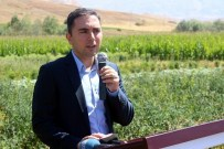 Çiftçiler Organik Tarımla Para Kazanacak