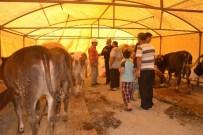 Kayseri'de Kurbanlık Hayvanlar Satışa Çıktı