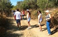 TUNCEL KURTİZ - Tuncel Kurtiz'in Anısına Trekking Düzenlendi