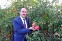 Adana'da Yılda 47 Bin Ton Nar Üretiliyor