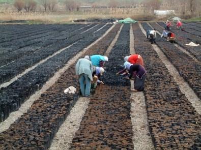 Siirt'e 30 Milyon TL'lik Fıstık Tesisi Kuruluyor