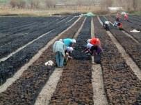 NURI OKUTAN - Siirt'e 30 Milyon TL'lik Fıstık Tesisi Kuruluyor