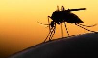 ZİKA VİRÜSÜ - Avrupa'ya Zika Virüsü uyarısı
