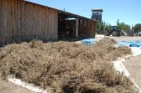 KEKIK YAĞı - Lisinia'ya Da Kekik Kokusu