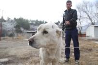 Eziyet Edilen Köpeği Hayvansever Sahiplendi