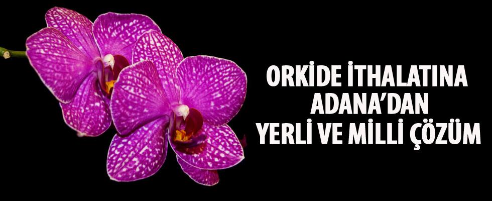 Orkide ithalatına Adana'dan yerli ve milli çözüm
