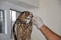 Nadir Görülen Yaralı 'Puhu' Kuşu Tedavi Altına Alındı