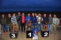 ALI BILGIN - Manavgat'ta Av Köpekleri Kıyasıya Yarıştı