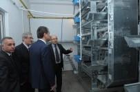 Vali Çelik, Damızlık Tavuk Islahı Enstitüsü Üretim İstasyonunda İnceleme Yaptı