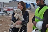 Kadın Milletvekili Günay'ın Köpek Sevgisi
