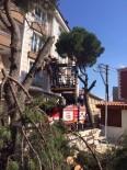 Gömeç'te Tehlikeye Neden Olan Ağaçlar Budandı