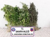 Sakarya'da Bir Haftada 7 Uyuşturucu Operasyonu