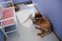 KÖPEK OTELİ - Köpeklere Özel Otel Açıklaması Yok Yok !
