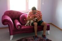 KÖPEK OTELİ - Sahibi Tatile Çıkan Köpekler İçin Özel Köpek Oteli