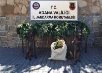 Adana'da Çiftlik Ve Bağ Evlerine Uyuşturucu Operasyonu