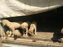 Şiddet Gören 8 Yavru Köpek Barınakta Koruma Altına Alındı