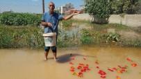 SURUÇ OVASI - Suruç'ta Ev Ve İş Yerlerini Su Bastı