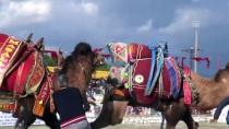 ÖMER SÜHA ALDAN - Yatağan 18. Geleneksel Deve Güreşi Festivali
