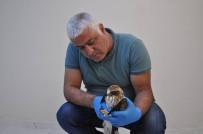 Tunceli'de Tedavisi Yapılan Kartal, Doğaya Bırakıldı