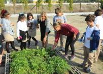 CAN YÜCEL - Öğrenciler Yerel Tohumunun Kıymetini Sebzelerini Yetiştirerek Anlayacak