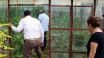 ESENPıNAR - Antalya'da Dolu Tarım Alanlarına Zarar Verdi